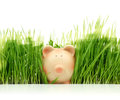 Piggy bank with green grass isolated on white background Stock Photos