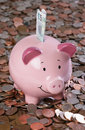 Piggy bank with money background Stock Photos