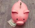 Piggy-bank /money savings / concept of growth Royalty Free Stock Photo