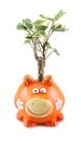 Piggy bank with tree Stock Photos