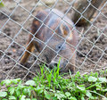 Piglets desire Royalty Free Stock Photo