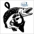 Pike fishing emblem shirt. Pike fish logo vector. Outdoor fishing background theme. Royalty Free Stock Photo