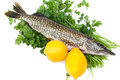 Pike With Lemons On Parsley Bed Stock Photography