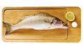 Pike perch on a wooden kitchen board Stock Image