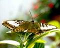 Piękno motyl Zdjęcia Royalty Free