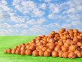 Pile big orange natural rustic pumpkins patch field harvest Royalty Free Stock Photo