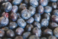 Pile of  blueberries , blue berry fruits Royalty Free Stock Photo