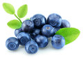 Pile of blueberries isolated on white background Royalty Free Stock Photo