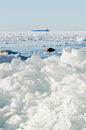 Pile broken ice floes baltic sea coast Royalty Free Stock Photography