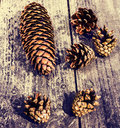 Pile of brown pine cones on wooden table for backgrounds or textures close up Royalty Free Stock Photography
