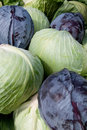 Pile of cabbage Royalty Free Stock Photo