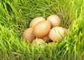 Pile chicken eggs green fresh wheat Royalty Free Stock Photo