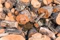 Chopped Wood logs Royalty Free Stock Photo