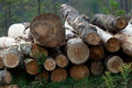 Pile of chopped wood stack at the edge a forest Royalty Free Stock Photos