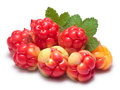 Pile of cloudberries rubus chamaemorus with leaves clipping paths berries and shadow separated infinite depth field Stock Images