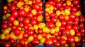 Colourful cherry tomatoes Royalty Free Stock Photo