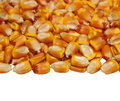 Pile corn isolated on white background macro Royalty Free Stock Images
