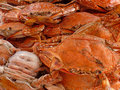 A Pile of Crabs Stock Photos