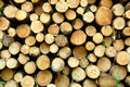 Pile of cut logs Royalty Free Stock Image