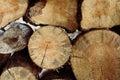 pile of cut wood stump log Royalty Free Stock Photo