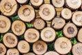 Pile of cut wood stump log texture Royalty Free Stock Photo