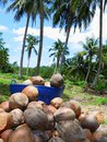 Pile of dried coconuts Stock Photo