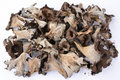 Pile of dried Horn of Plenty mushrooms over white Royalty Free Stock Photo