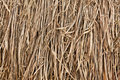 Pile of dry grasses Stock Photos