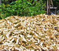 Pile of durian peels from the market thailand Stock Image