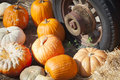 Pile of Fall Pumpkins and Old Rusty Antique Tire Royalty Free Stock Photo
