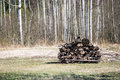 Pile of fire wood in countryside Royalty Free Stock Photo