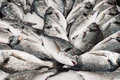 Pile of fish silver market in venice italy Royalty Free Stock Photos