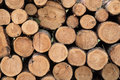 Pile Of Fresh Cut Wood