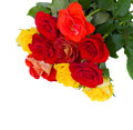 Pile of fresh garden roses isolated on white background Stock Image