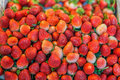 Pile of fresh garden strawberries (Fragaria x ananassa) Royalty Free Stock Photo