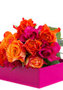 Pile  of fresh orange and pink  roses Stock Images