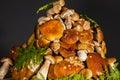 Pile of fresh porcini mushroomsblack background Royalty Free Stock Photo