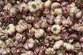 Pile of Garlic Royalty Free Stock Photo