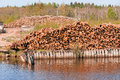 Pile of Graded and Numbered Debarked Logs Royalty Free Stock Photos