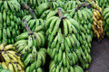 Pile of green babanas outdoors bananas group at Stock Photo