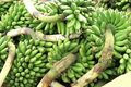 Pile of green bananas Stock Image