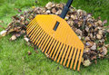 Pile of leaves with rake Royalty Free Stock Photo