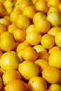 Pile of lemons Stock Images