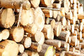 Pile of logs a with growth rings visible Royalty Free Stock Photography