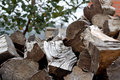 Pile of logs outside selective focus Royalty Free Stock Photo