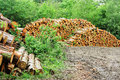 A Pile of Logs in a woodland clearing Stock Photography