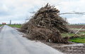 Pile with a lot of pruned branches large heap along narrow country road in dutch polder landscape Stock Photos