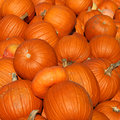 Pile of Many Pumpkins Stock Photo