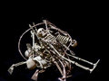 Pile o skeletons a of halloween decoration on pure black background Stock Photography