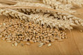 Pile of organic whole grain wheat kernels and ears Royalty Free Stock Photo